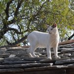 Cat on a hot stone roof